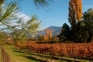 vigne-de-vin