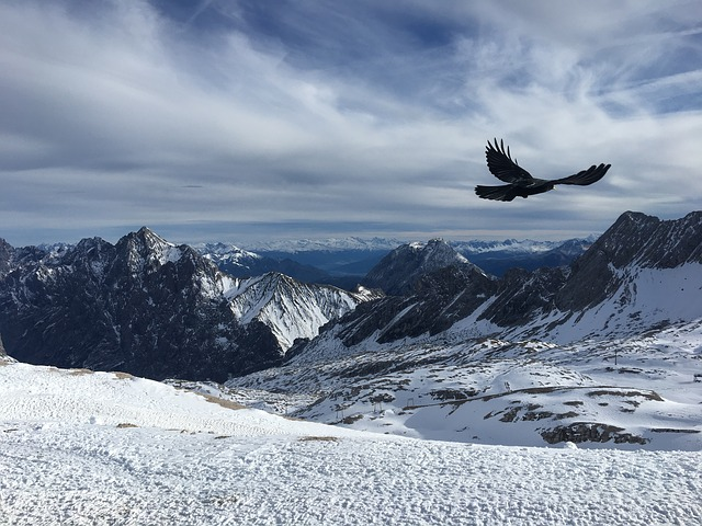 aigle montagne hiver