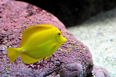poisson océanopolis brest