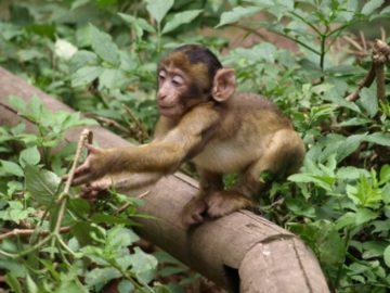 Vacances Montagne de singes