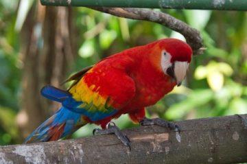 vacances parc oiseaux Lyon