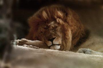 lion reserve sigean