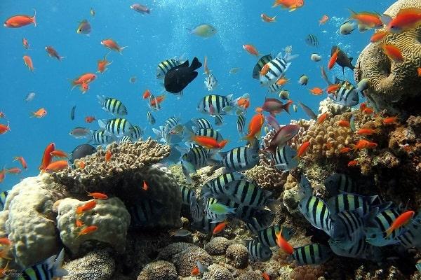 aquarium-oceanopolis-brest